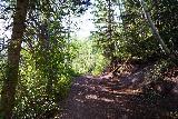Bear_Creek_Falls_020_07232020 - Still on the initial climb on the Bear Creek Trail
