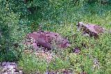 Bear_Creek_Falls_216_07232020 - Looking down at some kind of relic or remnant of some kind of mining infrastructure, I'd imagine, near the Bear Creek Trail
