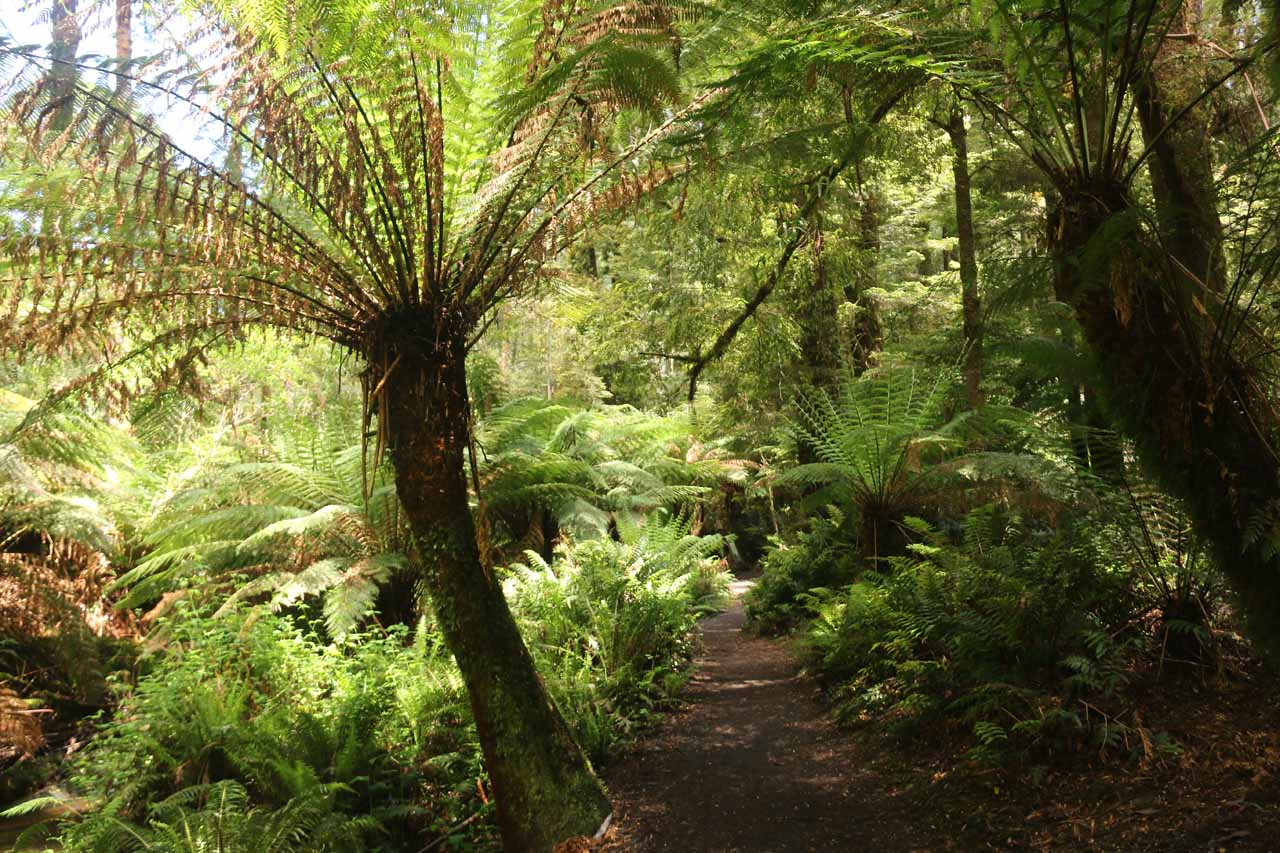 Hiking beneath some umbrella ferns as I was getting closer to the bottom of the long descent to Beauchamp Falls