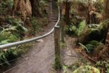 Beauchamp_Falls_17_066_11172017 - This was the railing that was set up to obscure the old path leading to the banks of Dappeler Creek and eventually the base of Beauchamp Falls as seen during my November 2017 visit