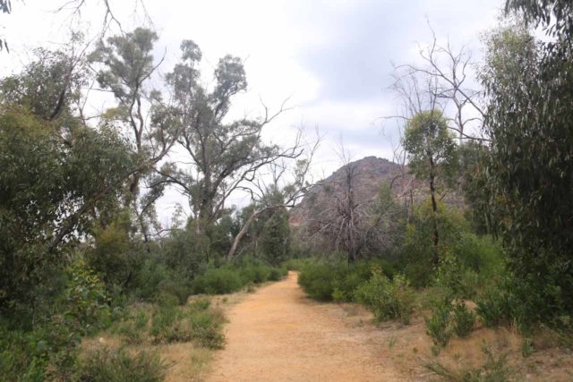 Beehive_Falls_008_11142017 - On the Beehive Falls Track, which passed through a semi-open area with very limited shade as I suspect this area has seen a bushfire or two