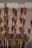 Beijing_006_05172009 - Scorpions on skewers at Wangfujian