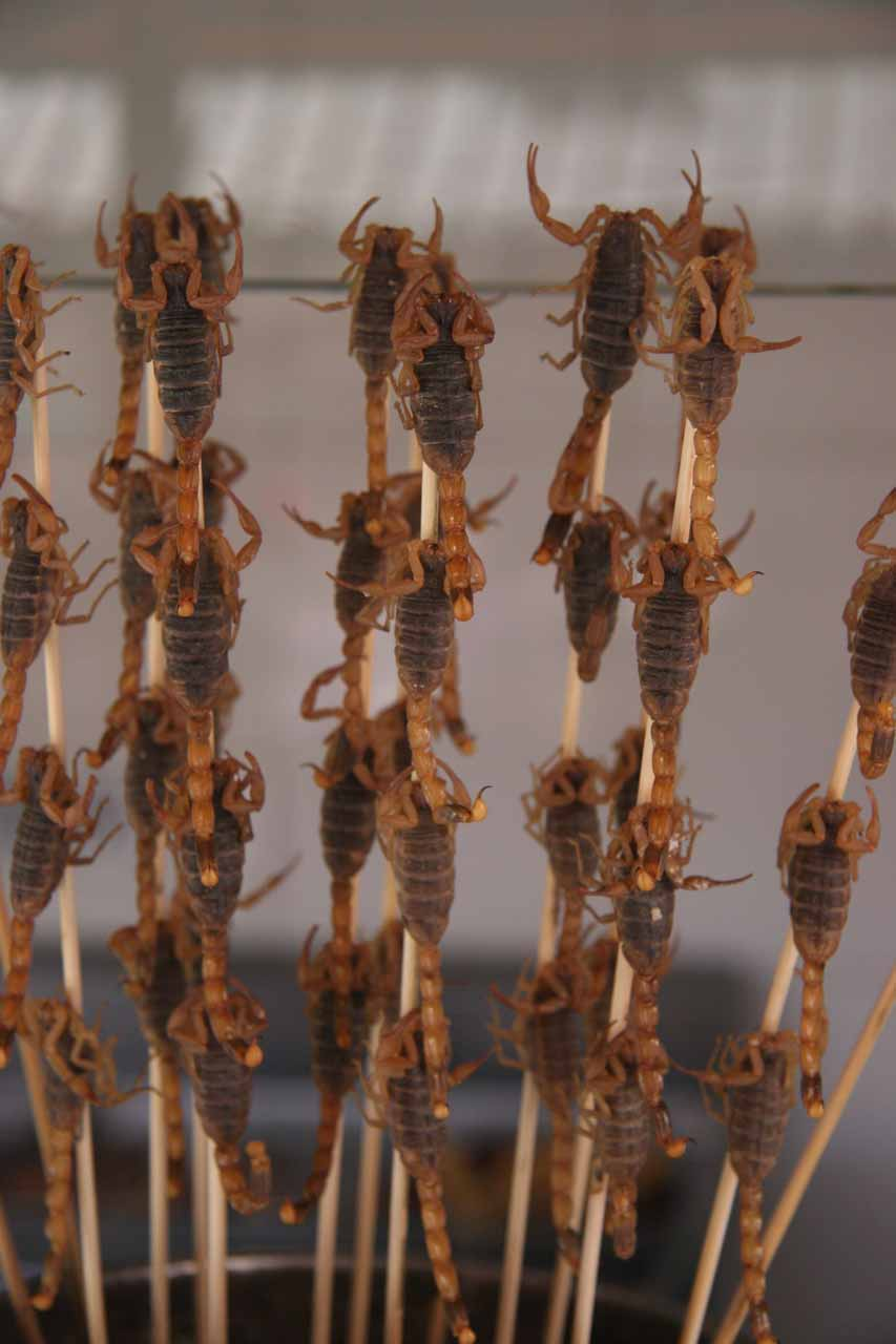 Scorpions on skewers at Wangfujian
