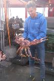 Bergen_147_06262019 - Someone showing off one of the giant king crabs at the Fisketorget in Bergen
