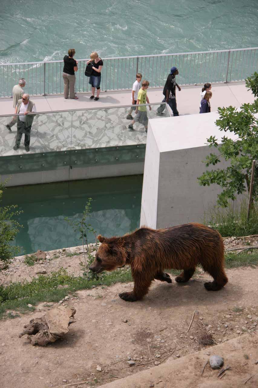One of the Bern Bears