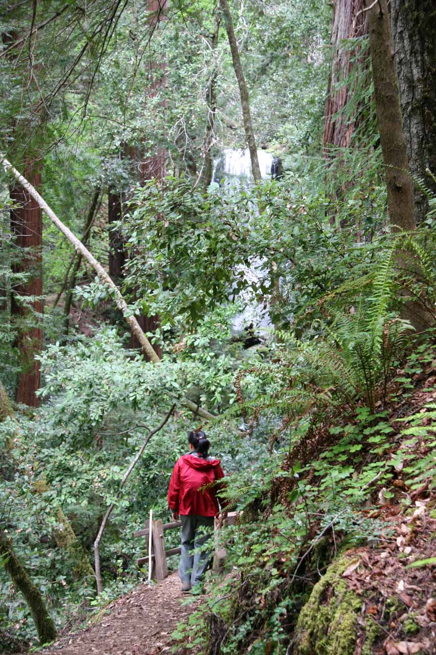Julie now on the Berry Creek Falls Trail with part of the waterfall seen up ahead