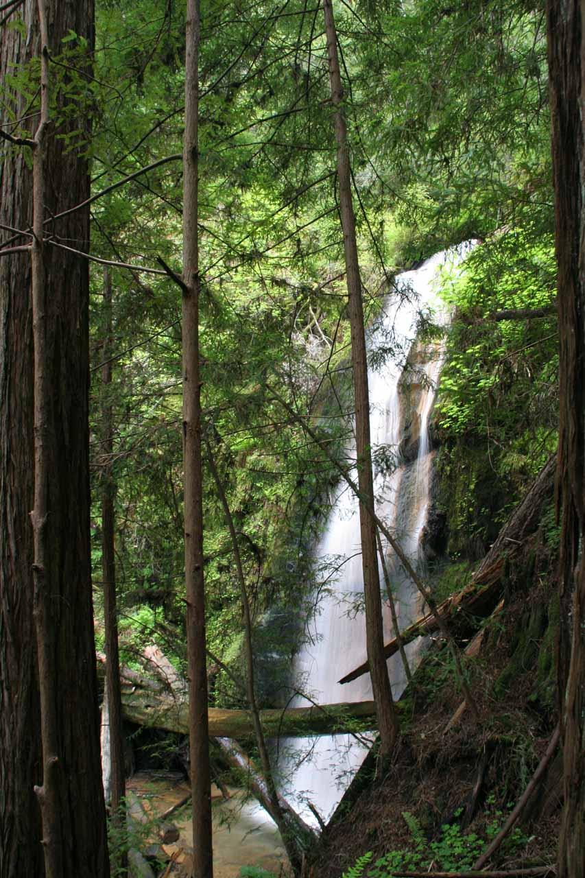 Silver Falls as seen through foliage on the trail