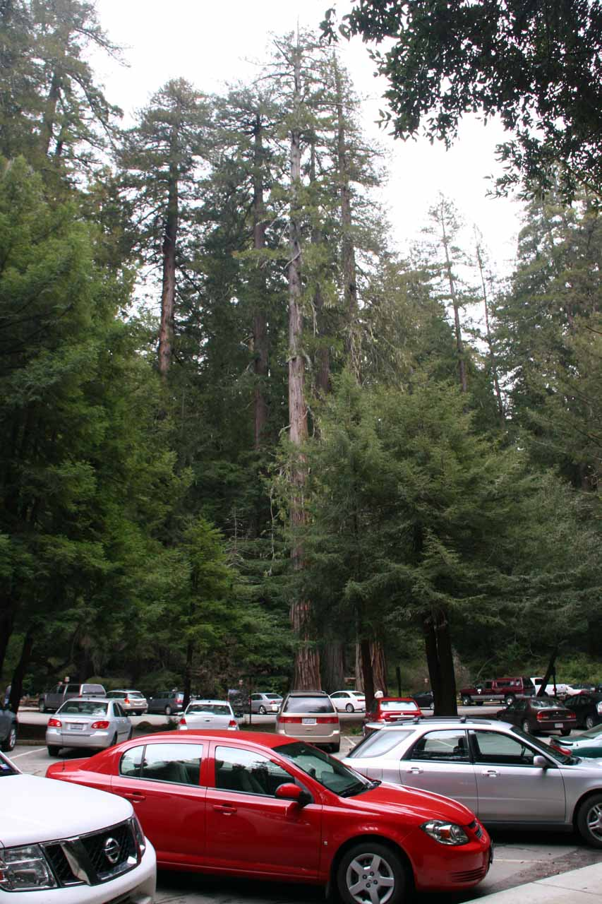 At the large car park for Big Basin Redwoods State Park near its headquarters