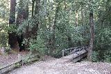 Big_Basin_Loop_004_04232019 - Approaching one of the footbridges as I pursued a counterclockwise loop taking in the Sunset Trail combined with the Skyline-to-the-Sea Trail encompassing Berry Creek Falls in April 2019