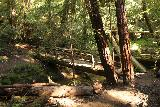 Big_Basin_Loop_107_04232019 - Crossing the footbridge over West Waddell Creek
