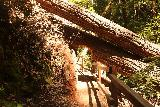 Big_Basin_Loop_347_04232019 - There were a lot of fallen trees around Berry Creek Falls (let alone Big Basin Redwoods State Park) during my April 2019 visit.  So I'd imagine there was a good deal of trail maintenance involved to help make the hiking more comfortable