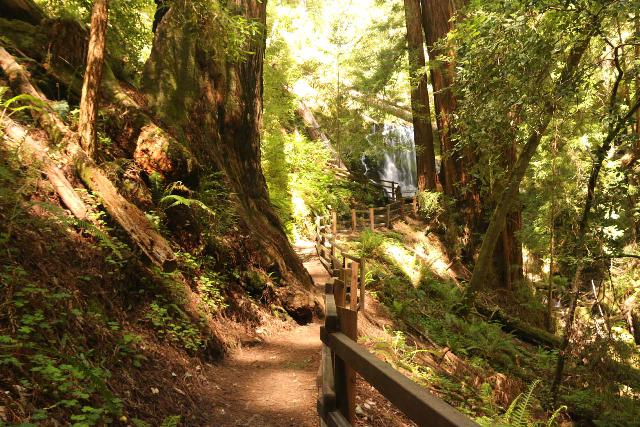 Big_Basin_Loop_394_04232019 - Approaching the Berry Creek Falls in the final climb up to its lookout platform