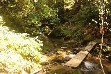 Big_Basin_Loop_412_04232019 - Crossing over West Waddell Creek during my April 2019 hike back to the Park Headquarters from Berry Creek Falls