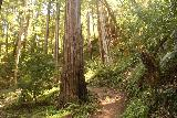 Big_Basin_Loop_428_04232019 - Continuing the uphill climb among the coastal redwood trees on the Skyline-to-the-Sea Trail in April 2019