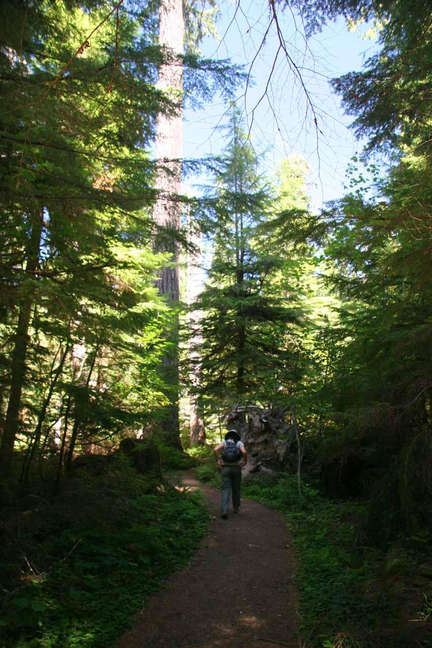 On the trail to Big Creek Falls