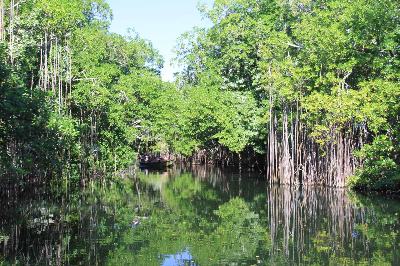 Eerie calm at the Black River in Jamaica