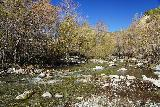 Bonita_Falls_015_01182021 - During our January 2021 visit, we assumed that Lytle Creek would flow low given the dry and warm Winter we had. Therefore, we came unprepared and didn't have a change of shoes to easily get by this crossing of Lytle Creek