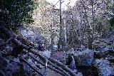 Bonita_Falls_049_01182021 - Approaching Bonita Falls with surprisingly good Winter flow in mid-January 2021