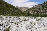 Bonita_Falls_194_06122020 - Context of Tahia in the wash on the return hike from Bonita Falls