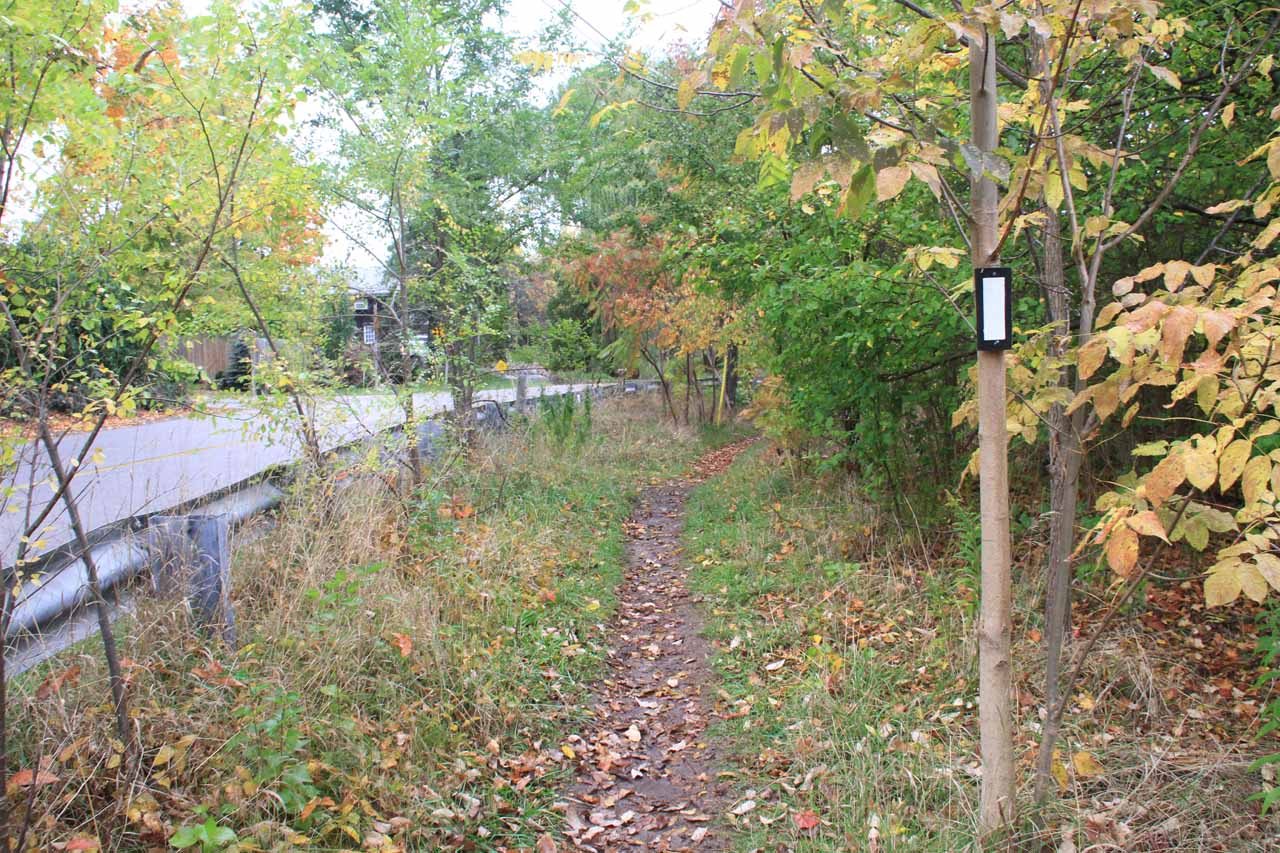 There were also white hashes by the Escarpment Trail suggesting that the Bruce Trail also coincided with this stretch of trail