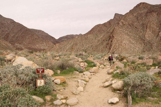 Borrego_Palm_Canyon_018_02092019 - Julie starting on the Borrego Palm Canyon Trail, which initially was in a wide and soil-rich alluvial fan