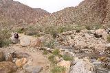 Borrego_Palm_Canyon_035_02092019 - Julie walking alongside the supposedly year-round stream through Borrego Palm Canyon