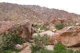 Borrego_Palm_Canyon_046_02092019 - Hiking amongst giant boulders strewn about along the Borrego Palm Canyon Trail