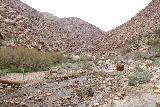 Borrego_Palm_Canyon_069_02092019 - Closure signs alongside the stream responsible for Borrego Palm Canyon