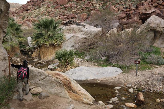 Borrego_Palm_Canyon_103_02092019 - Julie skirting by the stream as she approached the Borrego Palm Canyon oasis