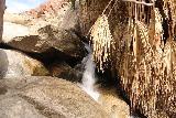 Borrego_Palm_Canyon_137_02092019 - A small cascade beyond the barricade at the end of the Borrego Palm Canyon Trail