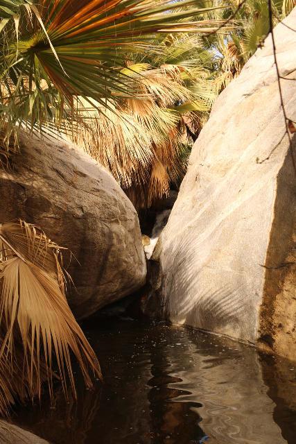 Borrego_Palm_Canyon_152_02092019 - Looking towards a small waterfall and deep pool just before the last turn in front of the fan palm oasis at the official end of the Borrego Palm Canyon Trail