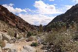 Borrego_Palm_Canyon_197_02092019 - Looking back at how far past the oasis we had gone