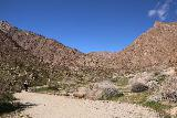 Borrego_Palm_Canyon_262_02092019
