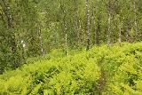 Bredekfossen_083_07092019 - Descending further on the steep and lush Bredekrunden trail