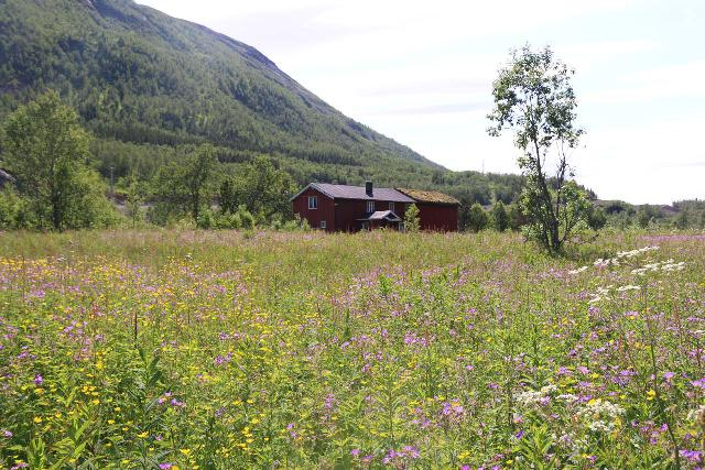 Bredekfossen_349_07092019 - Looking towards a field of wildflowers fronting a private farm by the west side of the Bredekrunden