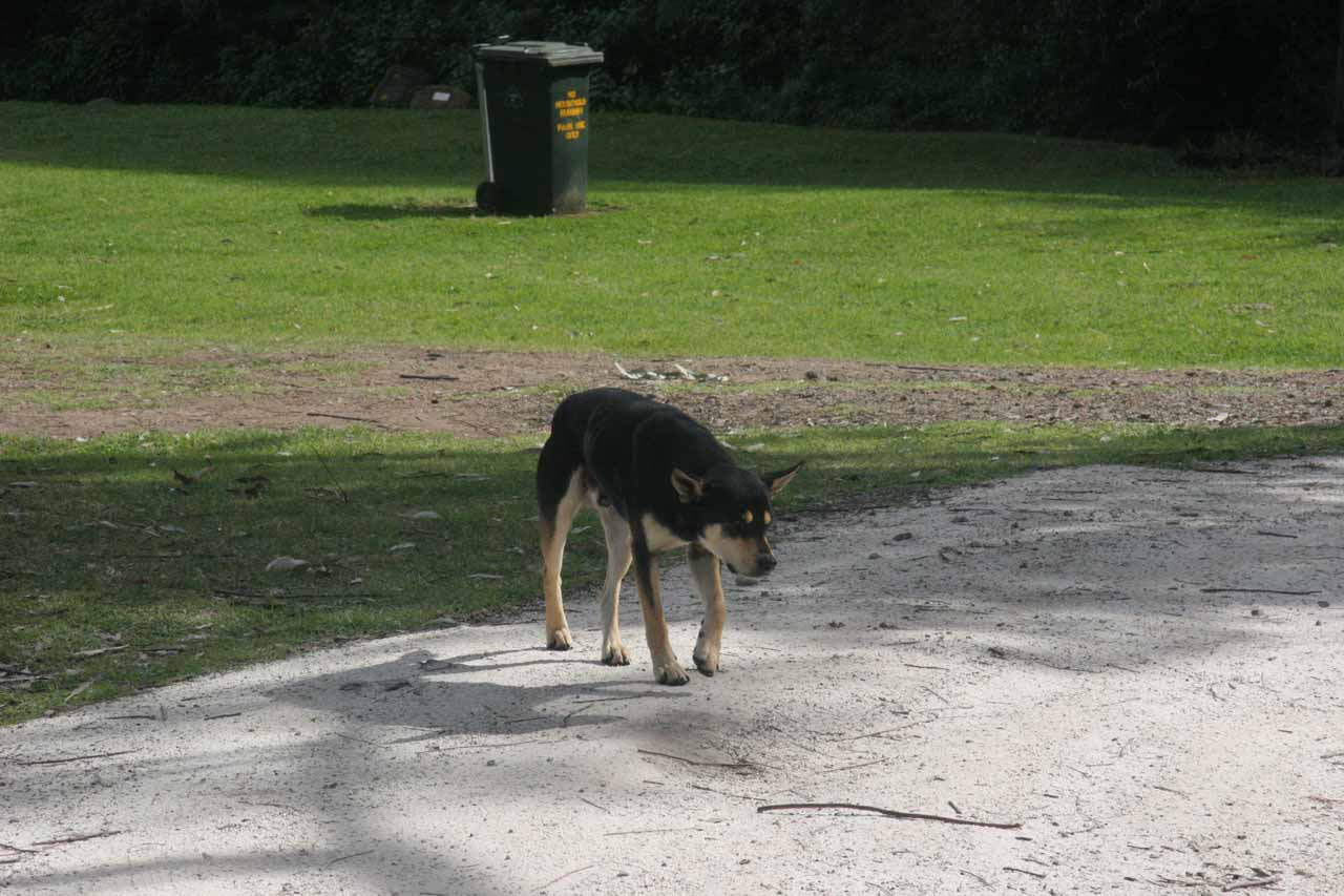 A dog that was roaming the Browns Picnic Area.  Since Julie was wary of stray dogs, we waited for it to clear the area before we started hiking