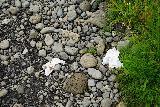 Bruarfoss_261_08062021 - More evidence of litter by people along the Bruarfoss Trail