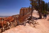 Bryce_Canyon_Inspiration_Pt_041_04032018 - Looking back at the uppermost viewpoint for Inspiration Point along with a tree with lots of roots trying to tap into moisture underground