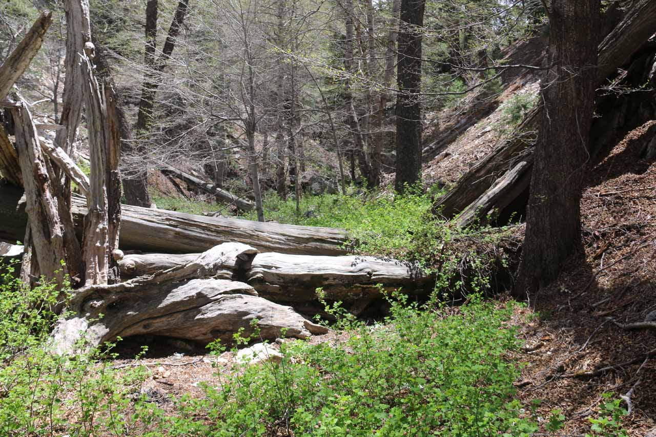 When I wasn't bouldering in Buckhorn Creek, I managed to wade through fallen trees and poison oak