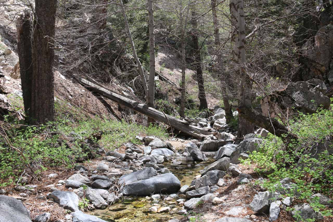 This was one of the easier parts of the Buckhorn Creek scramble