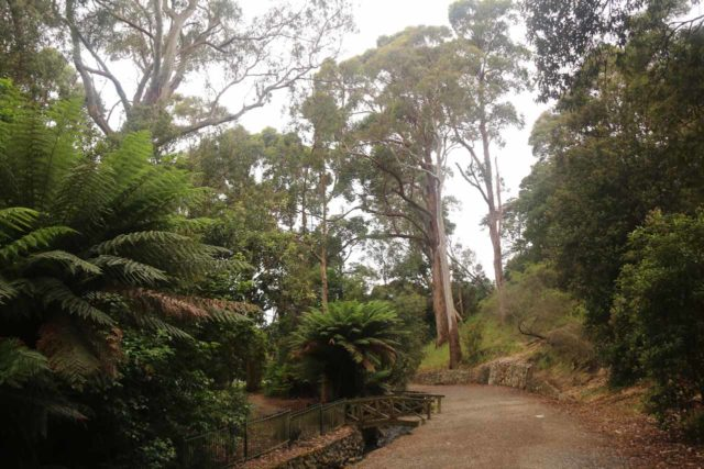 Burnie_Park_17_115_12012017 - Looking back at the footpath leading to Oldaker Falls in Burnie Park