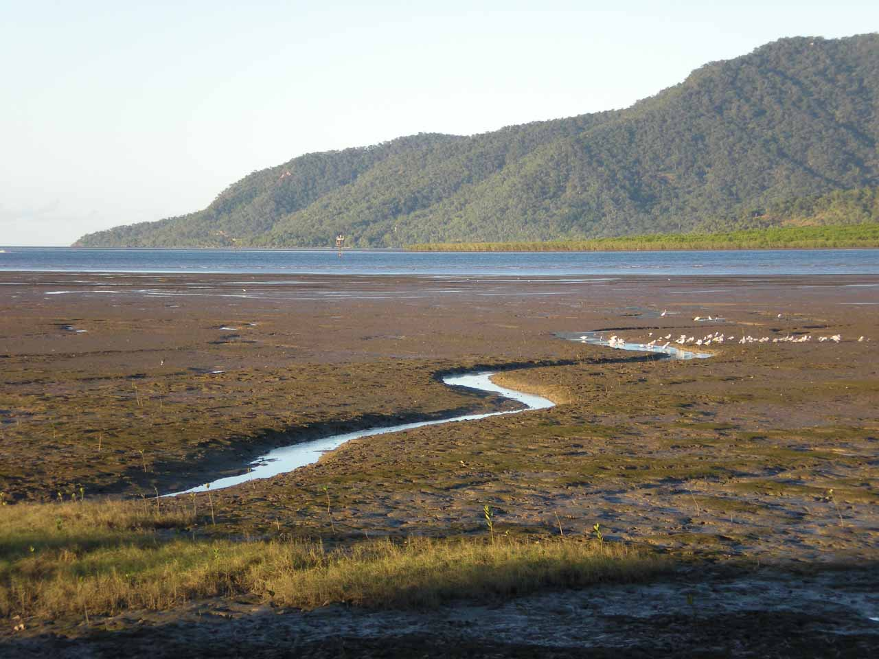 When we were walking back from the railway station in Cairns, we noticed it was low tide as we were looking out towards the Ocean from the Cairns CBD