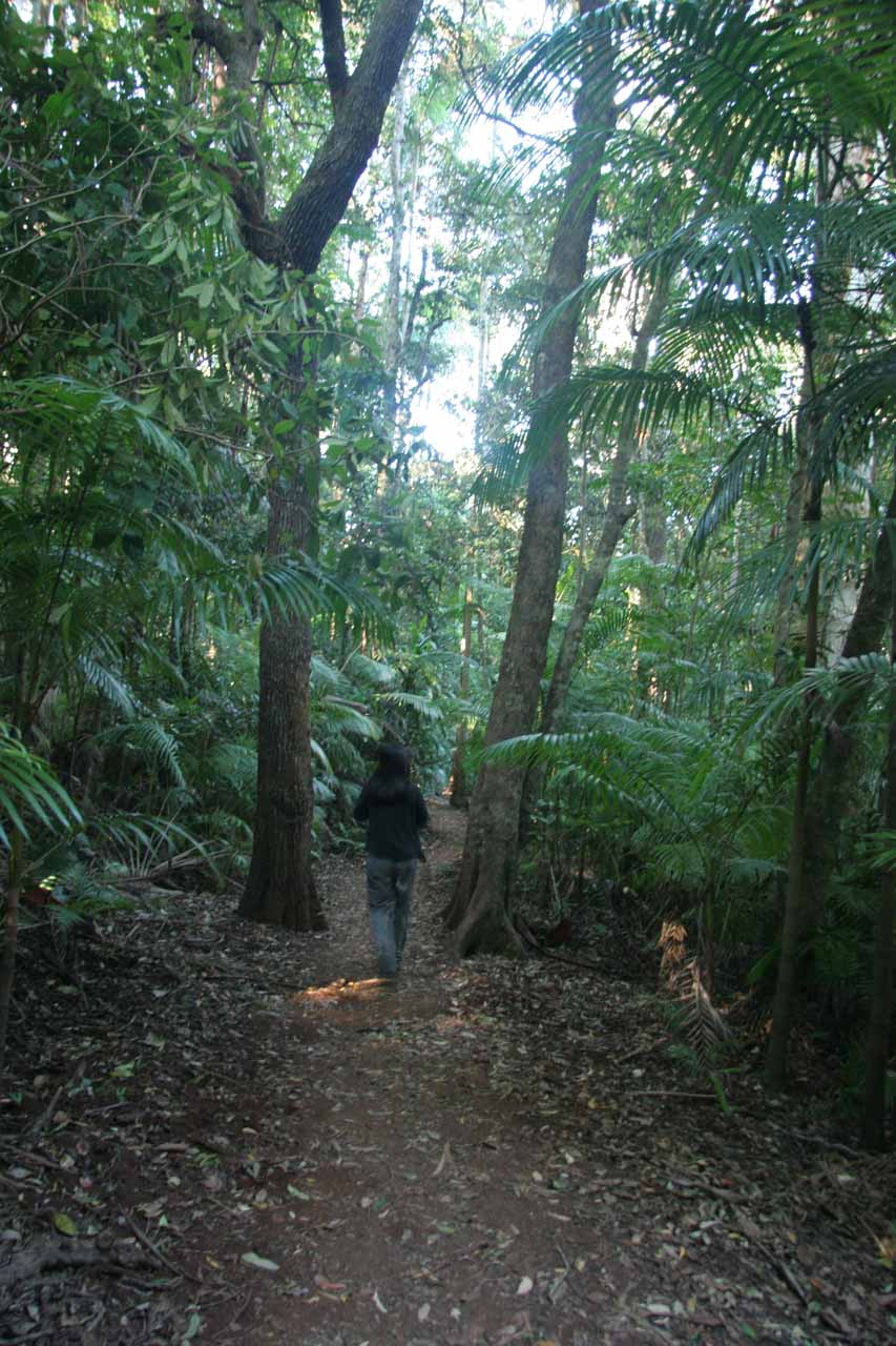Julie on the forested walking track