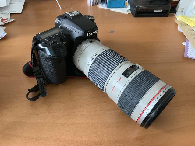This is my Canon EF 70-200mm F4L IS USM telephoto lens attached to my Canon EOS 70D camera body, which was excellent at taking wildlife shots