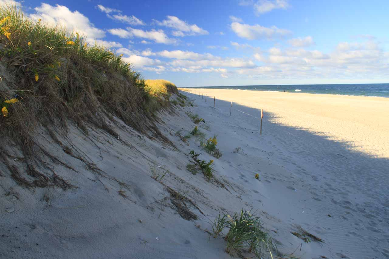 Dunes dropping into Nauset Beach