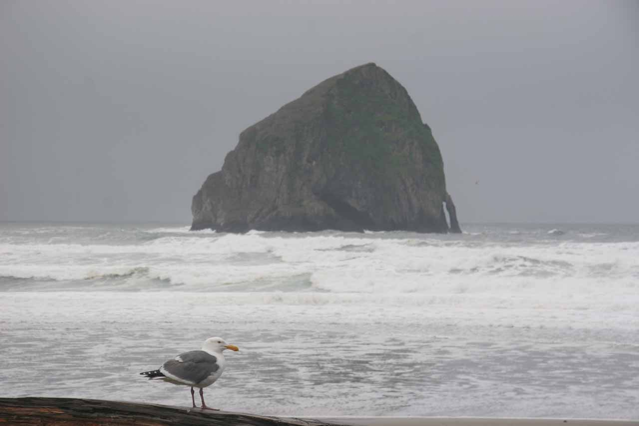 Way to the west of Salem, OR is the Oregon Coast, which struck us with its wild beauty such as this photo taken of a jug handle arch at Cape Kiwanda