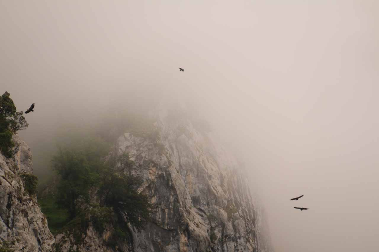 Looking up at what seemed to be condors or eagles soaring high up in the sky atop the Cares Gorge