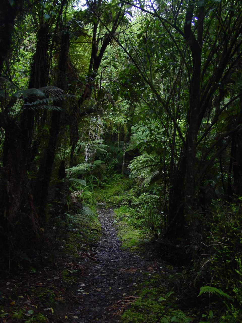 Going through the bush track to get to Carew Creek Falls