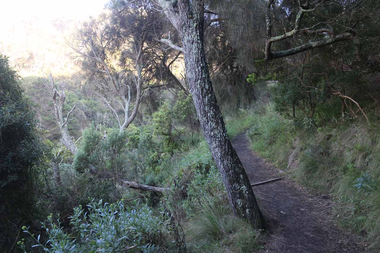 The track quickly ascended along a slope hugging the ravine carved out by Carisbrook Creek