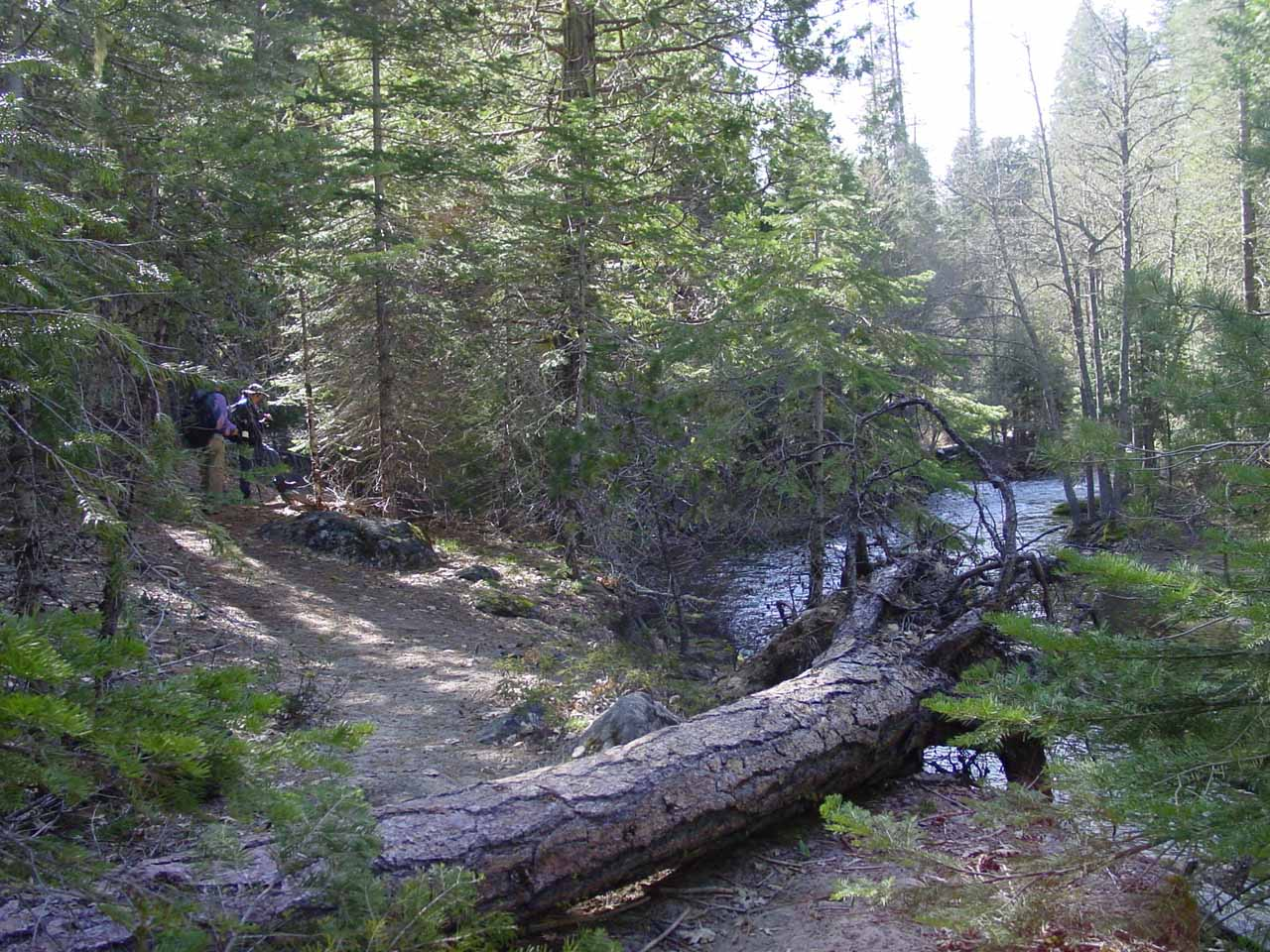 Just to give you an idea of what the hike was like in 2004, here's look at us going over a fallen tree as the trail meandered by the South Fork Tuolumne River